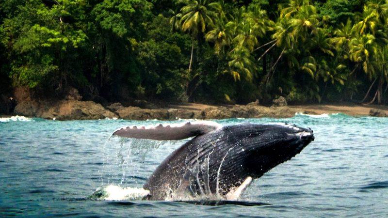 Walvis Ojochal Costa Rica Rondreis Op Maat Specialist
