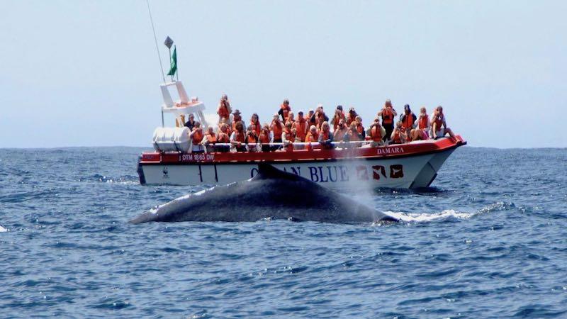 walvistocht in Plettenberg Bay Zuid-Afrika Rondreis Op Maat Specialist