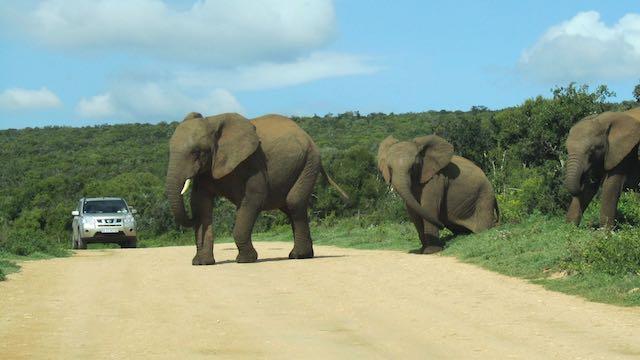 self drive Addo olifanten Zuid Afrika Rondreis Op Maat Specialist