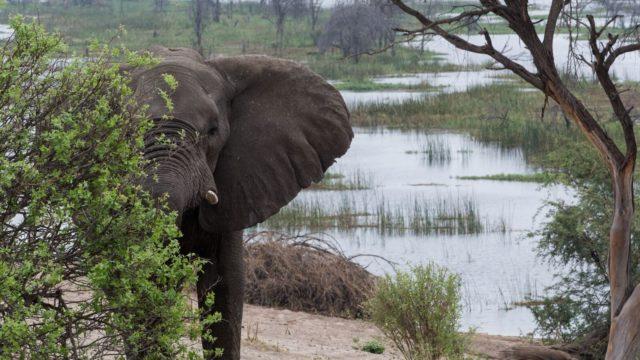 foto olifant Rondreis Op Maat Specialist