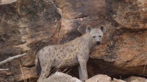 Familie Bekkering Namibie Botswana en Zuid Afrika Rondreis Op Maat Specialist5