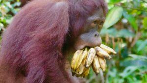 Activiteiten Camp-Leakey-Indonesië-Rondreis-Op-Maat-Specialist1