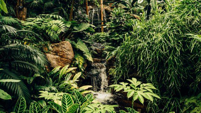 Belum Rainforest Maleisie Rondreis Op Maat Specialist