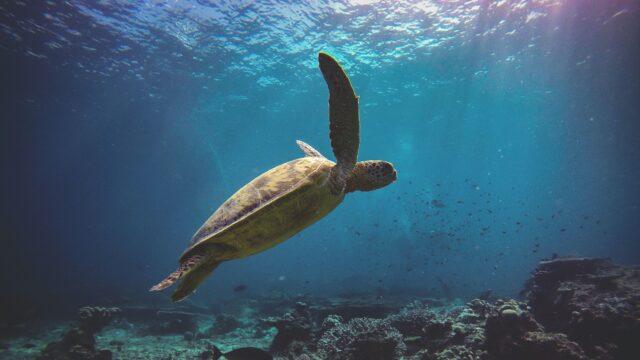 Pulau Gaya Maleisie Rondreis Op Maat Specialist