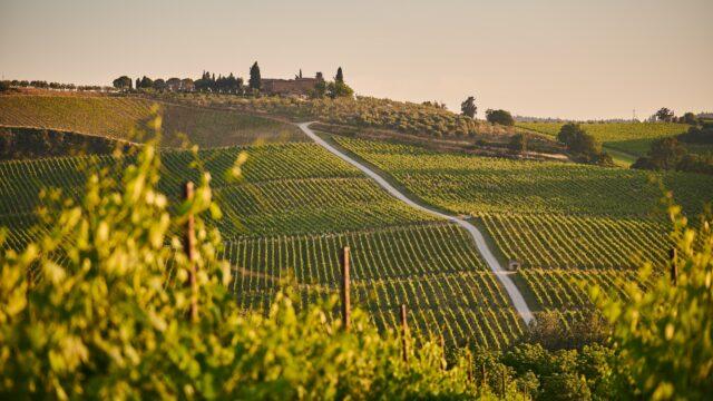 Wijnvelden Toscane Italië Europa Rondreis Op Maat Specialist