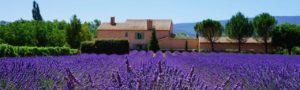 Europa Specialist Rondreis op Maat Lavendel banner