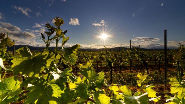 Wijnboerderij Europa Rondreis Op Maat Specialist