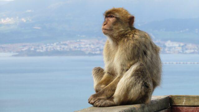 Gibraltar Europa Rondreis Op Maat Specialist